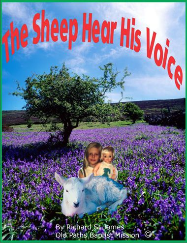 The Sheep Hear His Voice